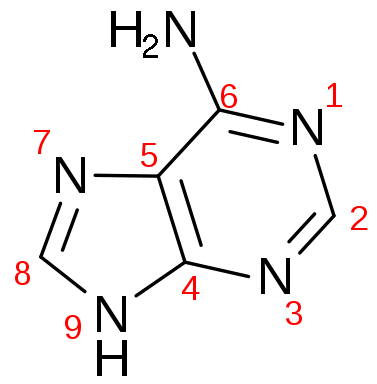File:377px-Adenine numbered.png