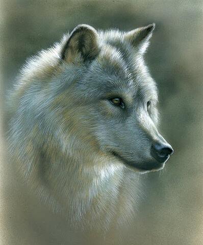 File:Russian wolf.jpg