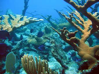 File:Reef.jpg