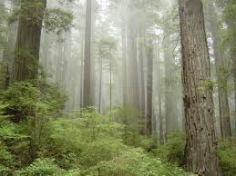 File:Redwoods-On.jpg
