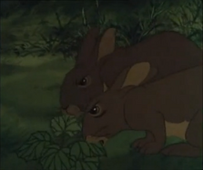 Owsla rabbits eating a cowslip
