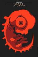 Adam (Embryo) Card