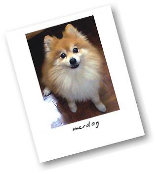 檔案:Macdog.jpg