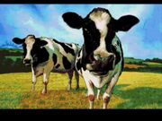 Cows EWJ2