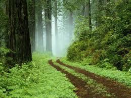 File:Forest road.jpg