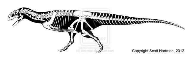 File:Majungasaurus - 2(Skeletal(Scott Hartman)).jpg