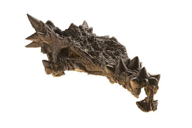 File:Dracorex - 1(Holotype).jpg