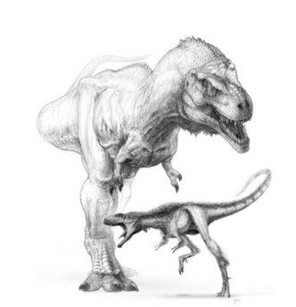 File:Raptorex compared to T-rex.jpg