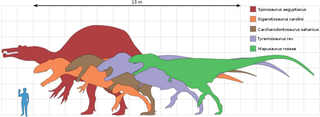 File:800px-Largesttheropods svg.png