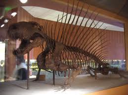 File:Dimetrodon.jpg