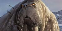 Milch Walrus