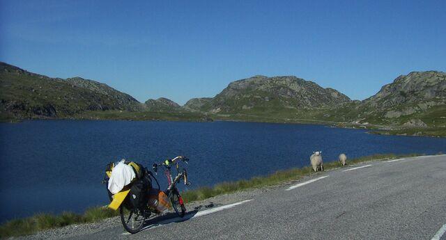 Datei:Norwegen Dalli See Schafe.jpg