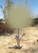 FO4 Thistle plant (exploding)