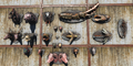 FO4WW Mounted creatures.png