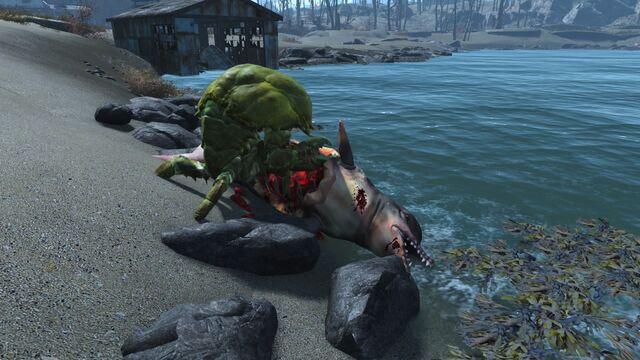 File:FO4Sea creature being eaten.jpg