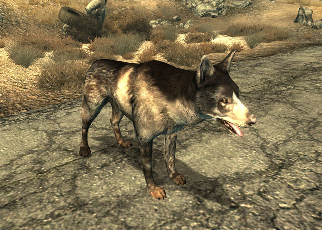 File:Dogmeat FO3.jpg