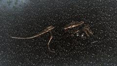 Submerged T-Rex