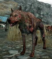 Vicious Dog alive.jpg