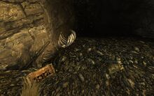 Cazador nest loot