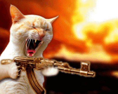 File:Crazy Cat with AK47.png