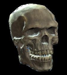 Shem drownes skull