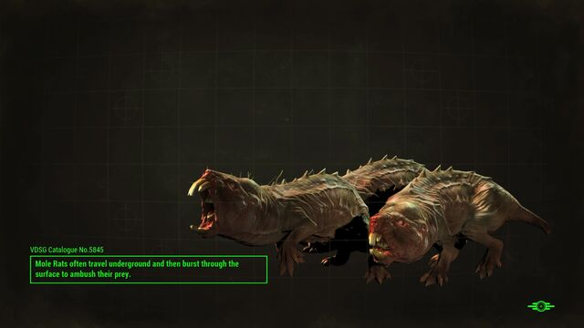 File:FO4 Mole rats loading screen.jpg