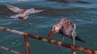 FO4 seagulls