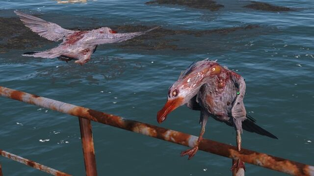 File:FO4 seagulls.jpg