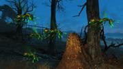 Flying glowing ant swarm