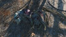 FO4 decaying Brahmin