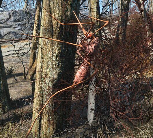 File:Fo4-bloodbug-tree.jpg