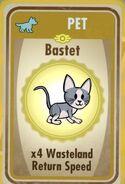 Basket (cat)