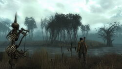 Point Lookout Swamp.jpg