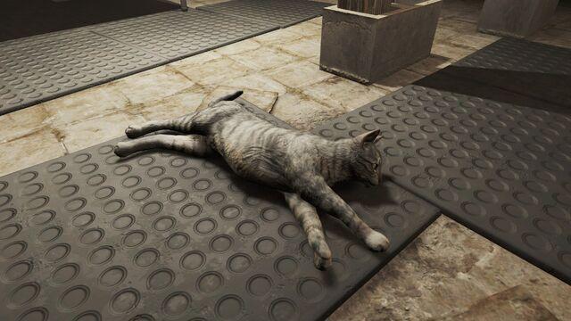 File:FO4 School Cat Diamond City.jpg