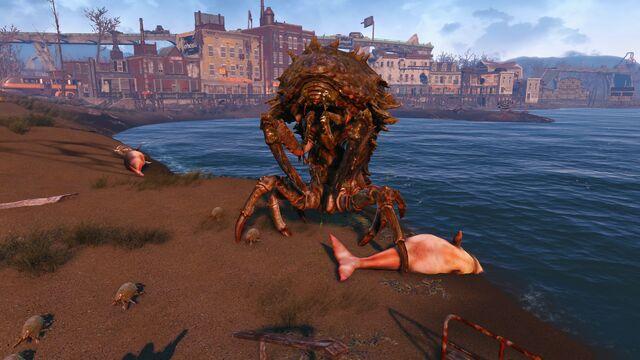 File:Fo4 creature Mirelurk queen portrait Revere Beach station.jpg