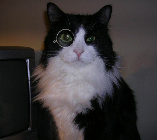 File:Cat with monocle.jpg