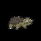 Sheldonturtle