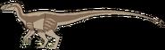 Komodotar