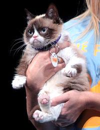 File:Grumpy Cat by Gage Skidmore.jpg