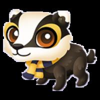 Loyal Badger Baby