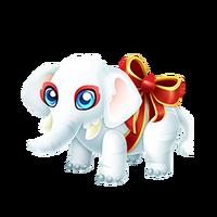 White Elephant Juvenile