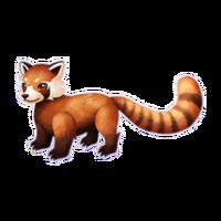 Red Panda Adult