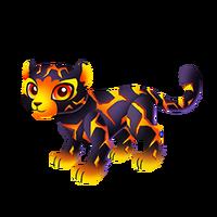 Lava Leopard Juvenile