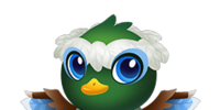 Friar Duck