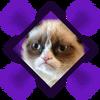 Grumpy Cat Omni