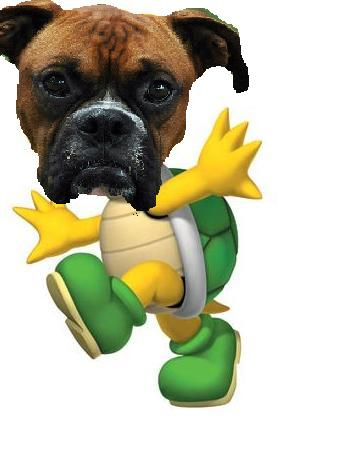File:Koopa-Troopa.jpg