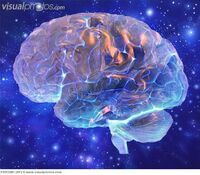 Human brain computer artwork the front of the f0013207