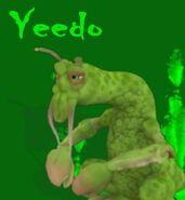 Yeedo