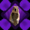 Photobomb Squirrel Omni