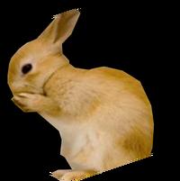 Tkr kanin